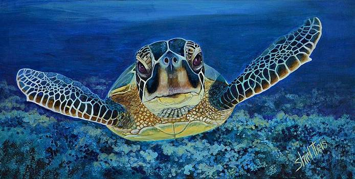 Sea Turtle by Shirl Theis