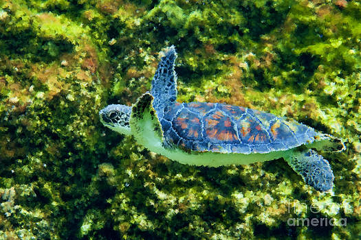 Dan Friend - Sea turtle swimming in water