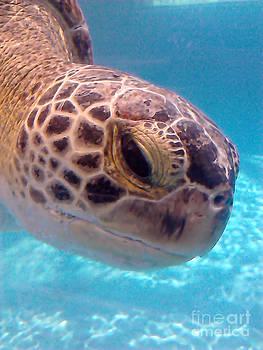 Sea Turtle by Thomas OGrady
