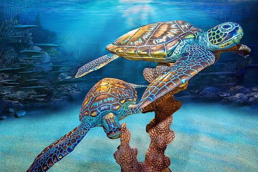 Sea Turtles by Jon Cody