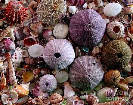 Sea Urchins and Shells by Sylvie Heasman