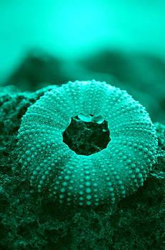 Sea Urshin Blue by Riad Belhimer