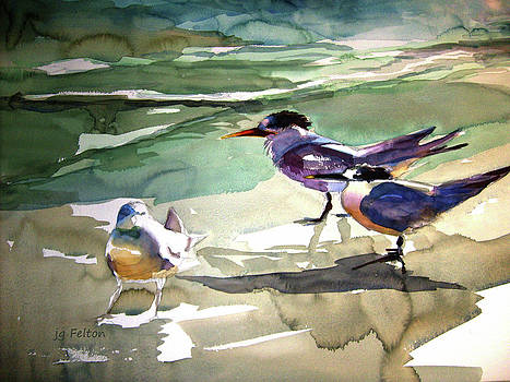 Seabirds  1  by Julianne Felton