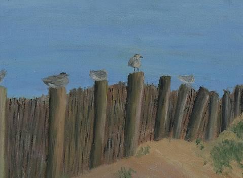 Seabirds on Fence by Heather Walker