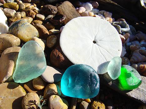 Baslee Troutman - Seaglass art prints Rock Garden Sand Dollar