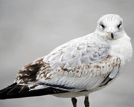 Leslie Cruz - Seagull 1