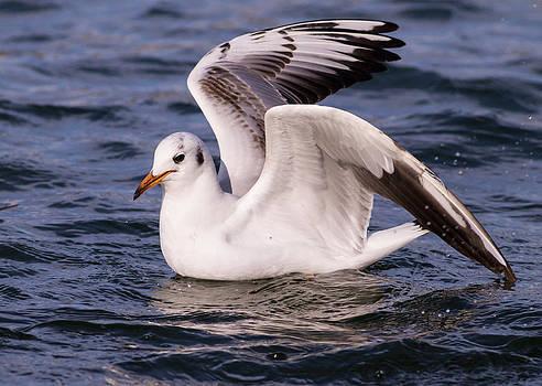 Seagull 2 by Florentina De Carvalho