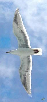 Marcello Cicchini - Seagull 3