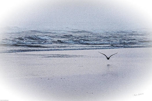 Mick Anderson - Seagull and Surf