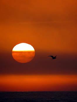 Ramona Johnston - Seagull at Sunset
