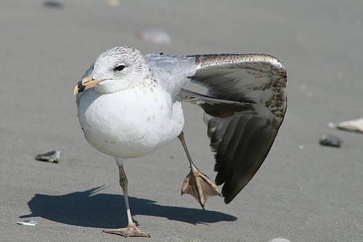 Seagull Ballet by Beth Andersen