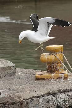 Andrew  Hewett - Seagull Boogie Woogie