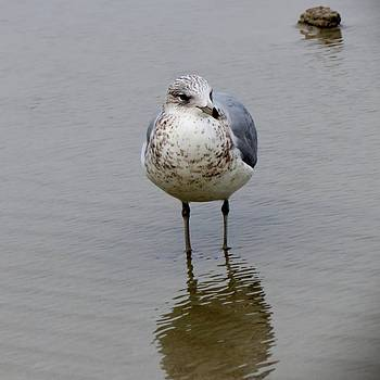 Seagull by Brandi Jones
