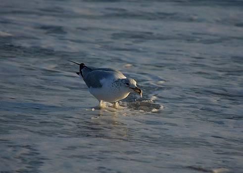 Patricia Twardzik - Seagull by the Seashore