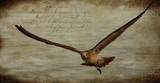 Seagull by Hazel Billingsley