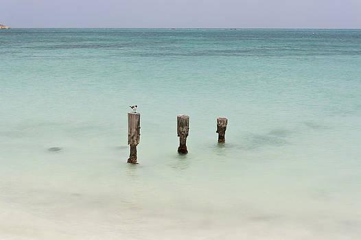 Seagull in Antigua by Pier Giorgio Mariani