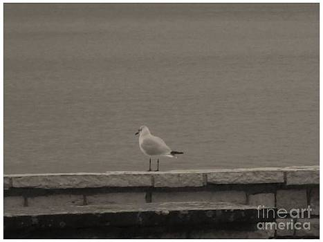 Seagull in black by Katerina Kostaki