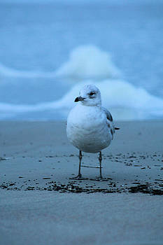 Seagull and Sea by Paulette Maffucci
