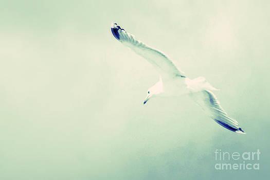 Seagull In Soft Sky by Ste Flei