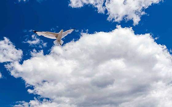 Seagull in the Sky by Lonnie Paulson