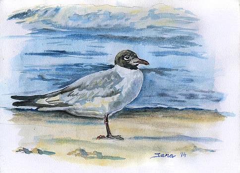Seagull by Jana Goode