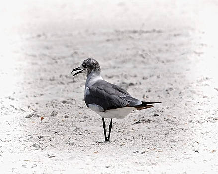 Judy Hall-Folde - Seagull