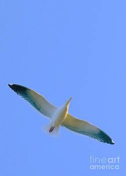 Seagull by Kari Marttila