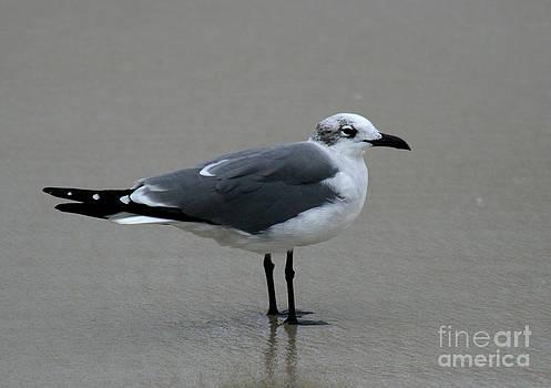 Seagull by Lynn Jackson