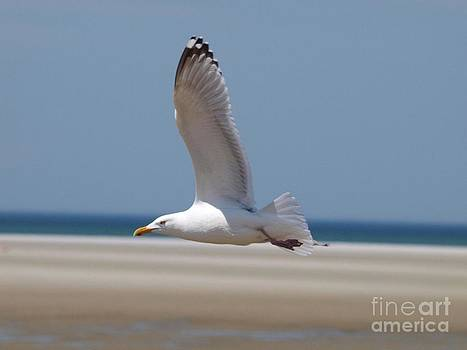 Seagull by Maria Wood