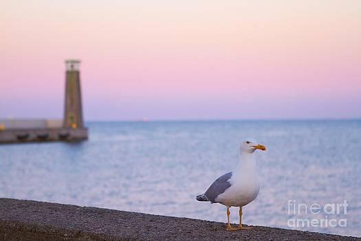 Seagull by Monika Wisniewska