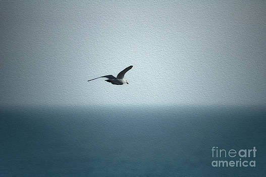 Seagull by Nur Roy