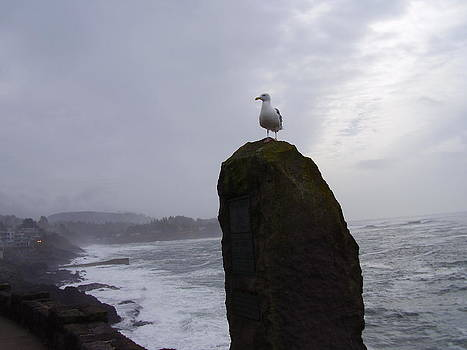 Seagull On A Boulder by Yvette Pichette