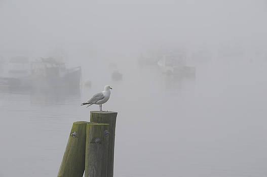 Mary Lee Dereske - Seagull on a Foggy Morning