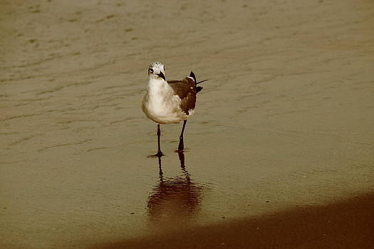 Seagull on Shore by Brandi Perry
