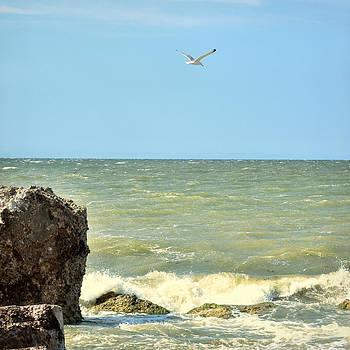 Gynt - Seagull over the sea
