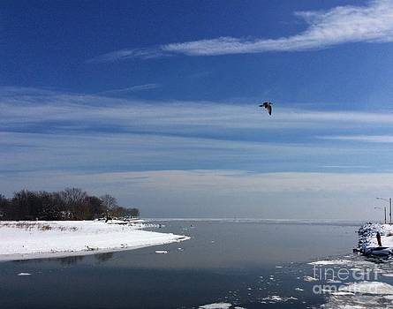Seagull photo bomb by Ann Money