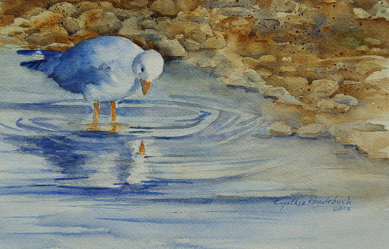 Seagull Reflection by Cynthia Roudebush