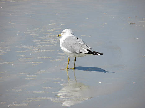 Seagull Shadows by Rosie Brown