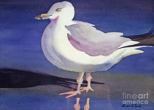 Shirin Shahram Badie - Seagull