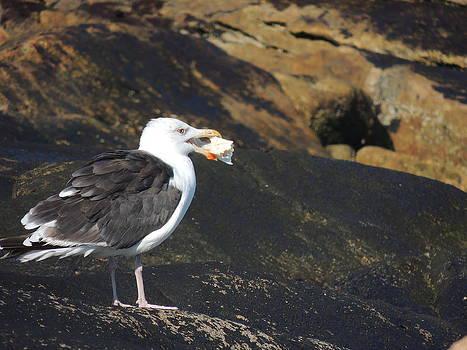 Anastasia Konn - Seagull snacking