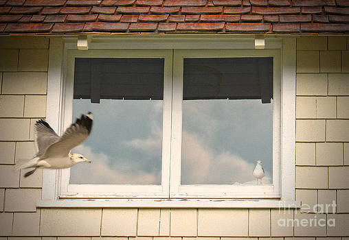 Seagull by Stella Levi