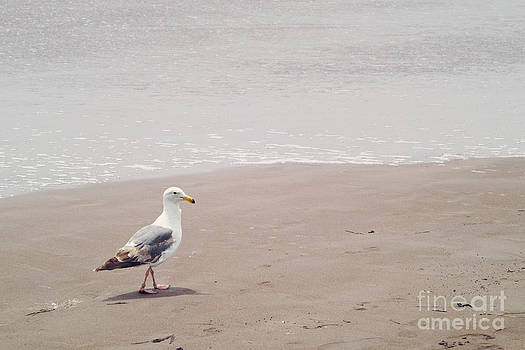 Seagull strolling by Cindy Garber Iverson