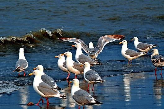 Debra  Miller - Seagull Style