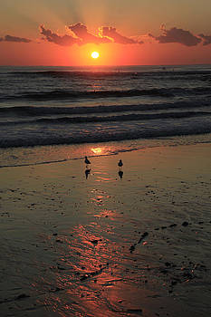 Seagull Sunrise by Noel Elliot
