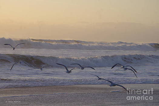 Seagull sunrise by Tannis  Baldwin