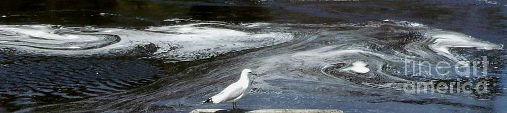 Gail Matthews - Seagull views water currents 2