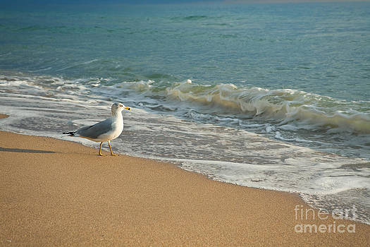 Seagull Walking On A Beach by Sharon Dominick