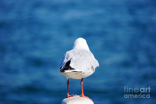 Beverly Claire Kaiya - Seagull with Red Feet Gazing at the Sea