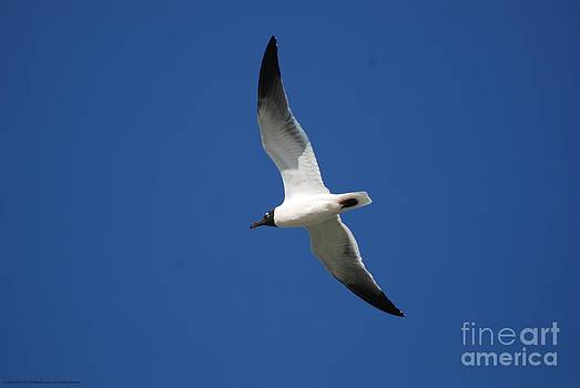 Seagull You Fly by GD Rankin