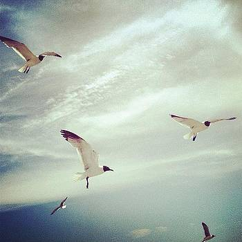 #seagulls #clouds #sky #cloudporn by A Loving